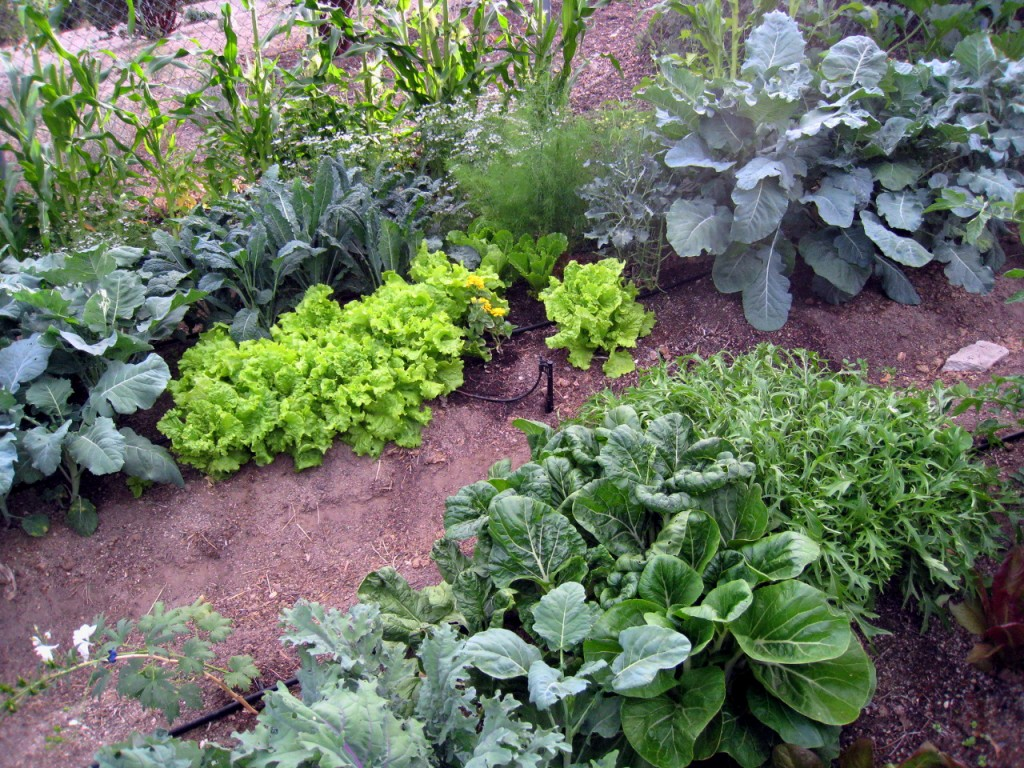 Garden + Greywater