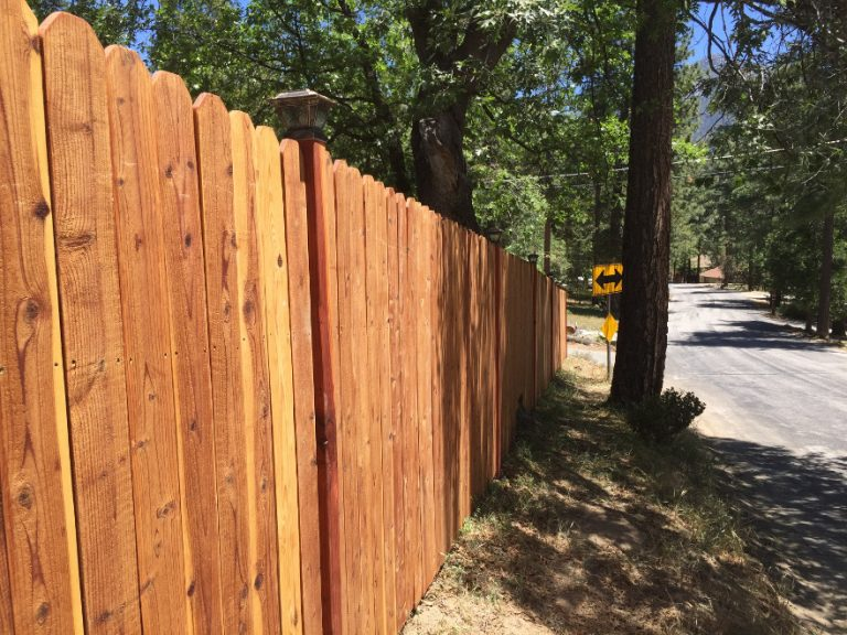 Fence and Cypress Trees